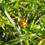 lady-bug-1
