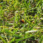lady-bug-2