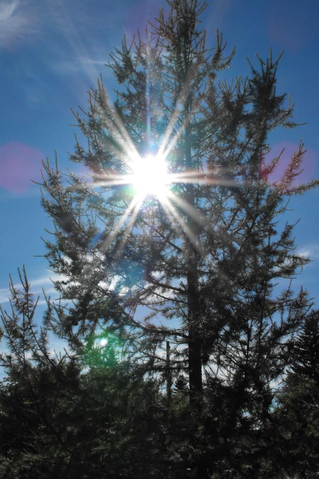 summer-tree-lights